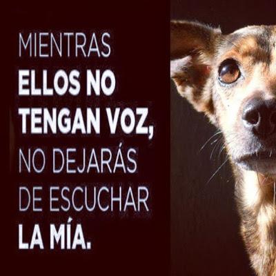 Mi alma es la del perro callejero