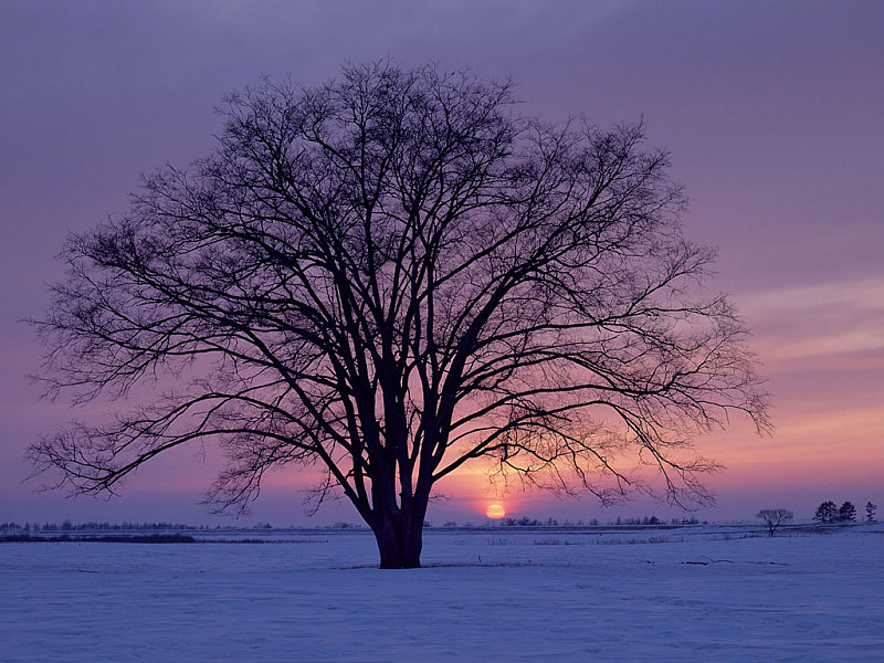 Free Wallpaper: Winter Sunrise Wallpaper