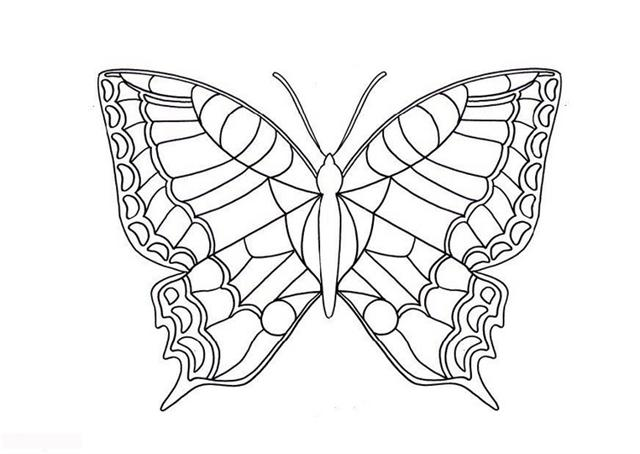 coloring pages detailed butterfly - photo#29