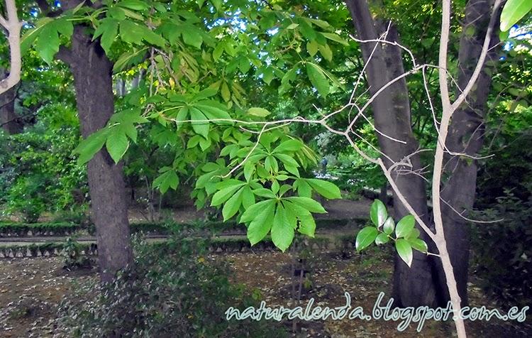 arbol oculto