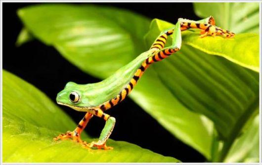 Wonderful animal gallery   Animal Photo