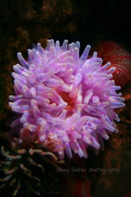 sea, anemone, MacDuff aquarium