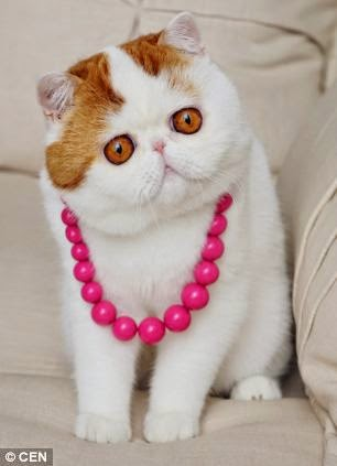 cat wear neckless