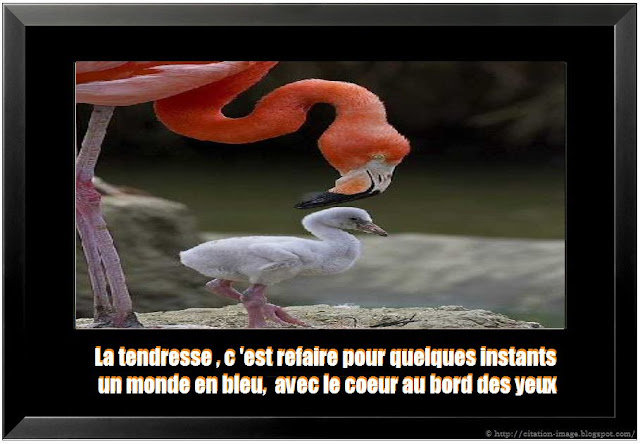 image citation tendresse