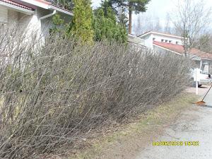Puutarhapalvelu Tampere apunanne ottakaa sähköpostilla yhteyttä