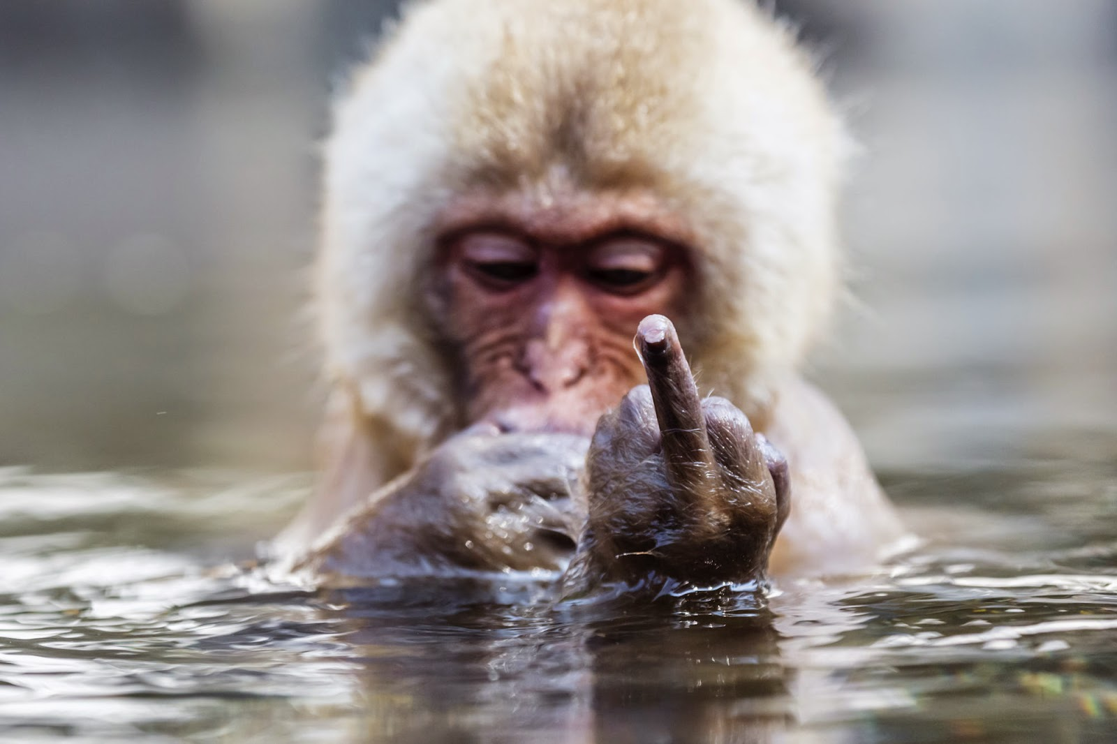 60 Interesting Facts about Monkeys  FactRetrievercom