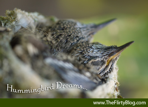 Dreaming Baby Hummingbirds
