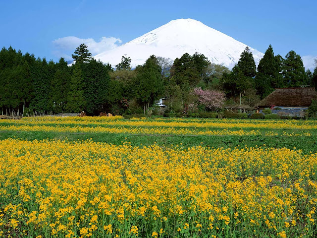 mount fuji wallpapers-01