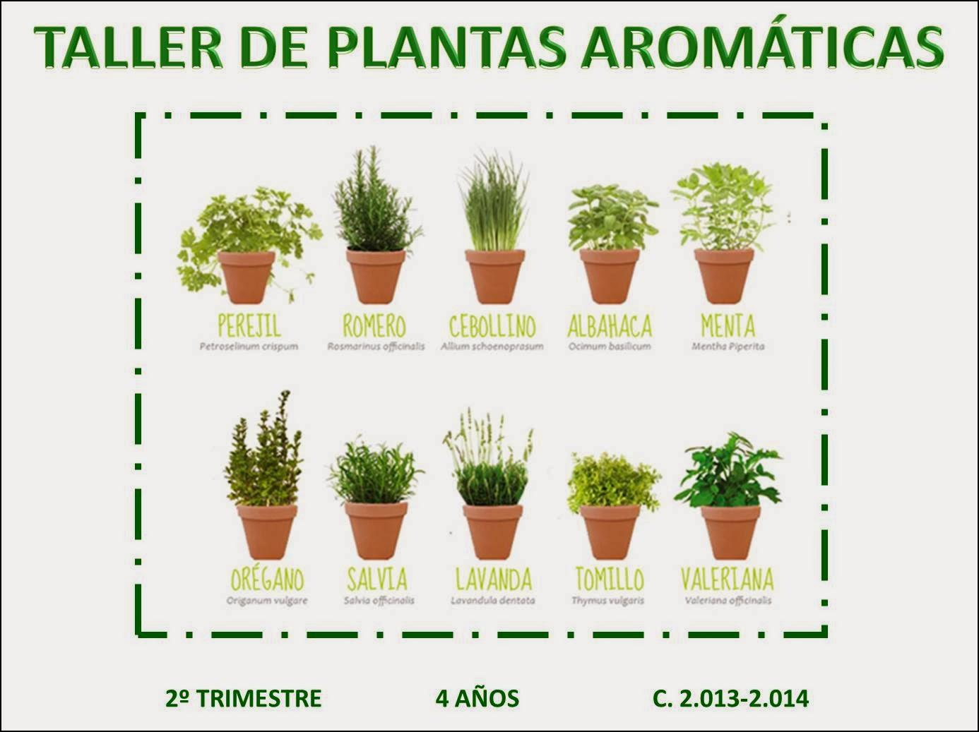 P4gregorimayans2013 taller 1 plantas arom ticas la for Asociacion de plantas aromaticas