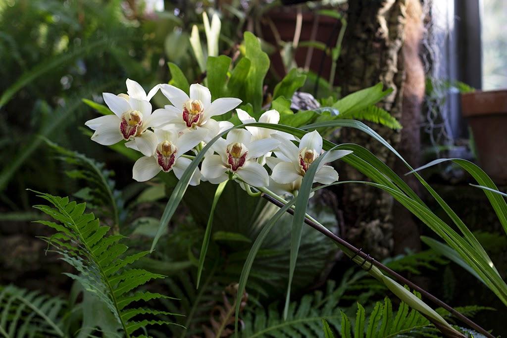 Orquídea invernadero botánico Madrid