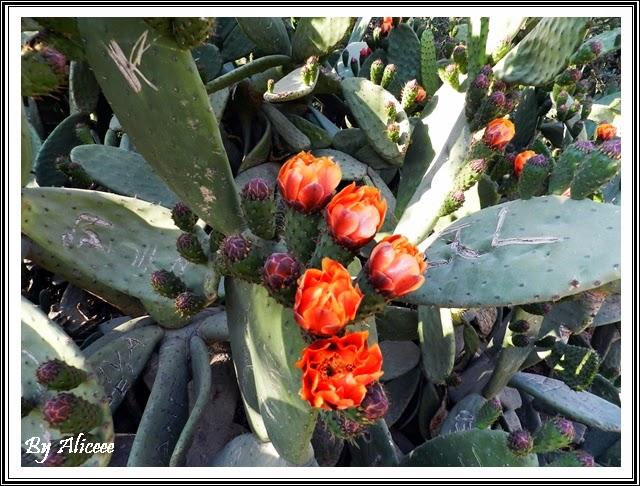 flori-park-guell