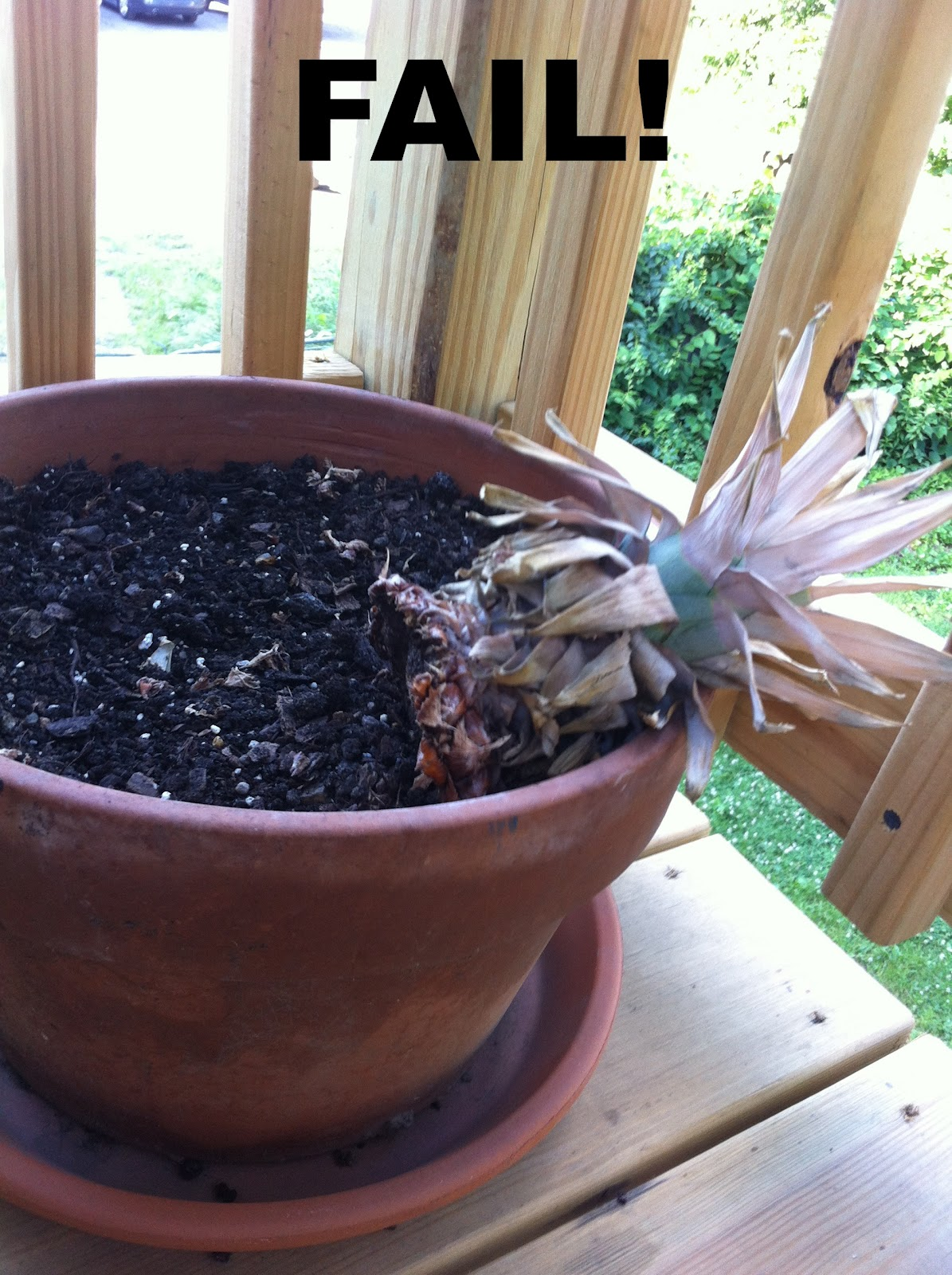 Plant eat create pineapple plant fail help for How to plant a pineapple top in a pot