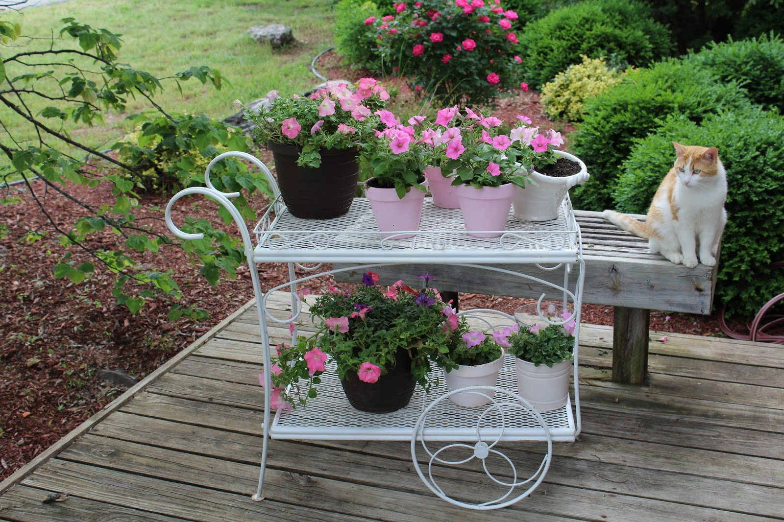 Olivia 39 s romantic home shabby chic garden for Idee deco retro chic