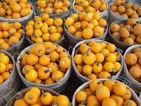 Pumpkin bushels