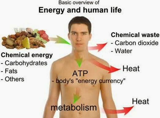 Hasil gambar untuk metabolisme tubuh