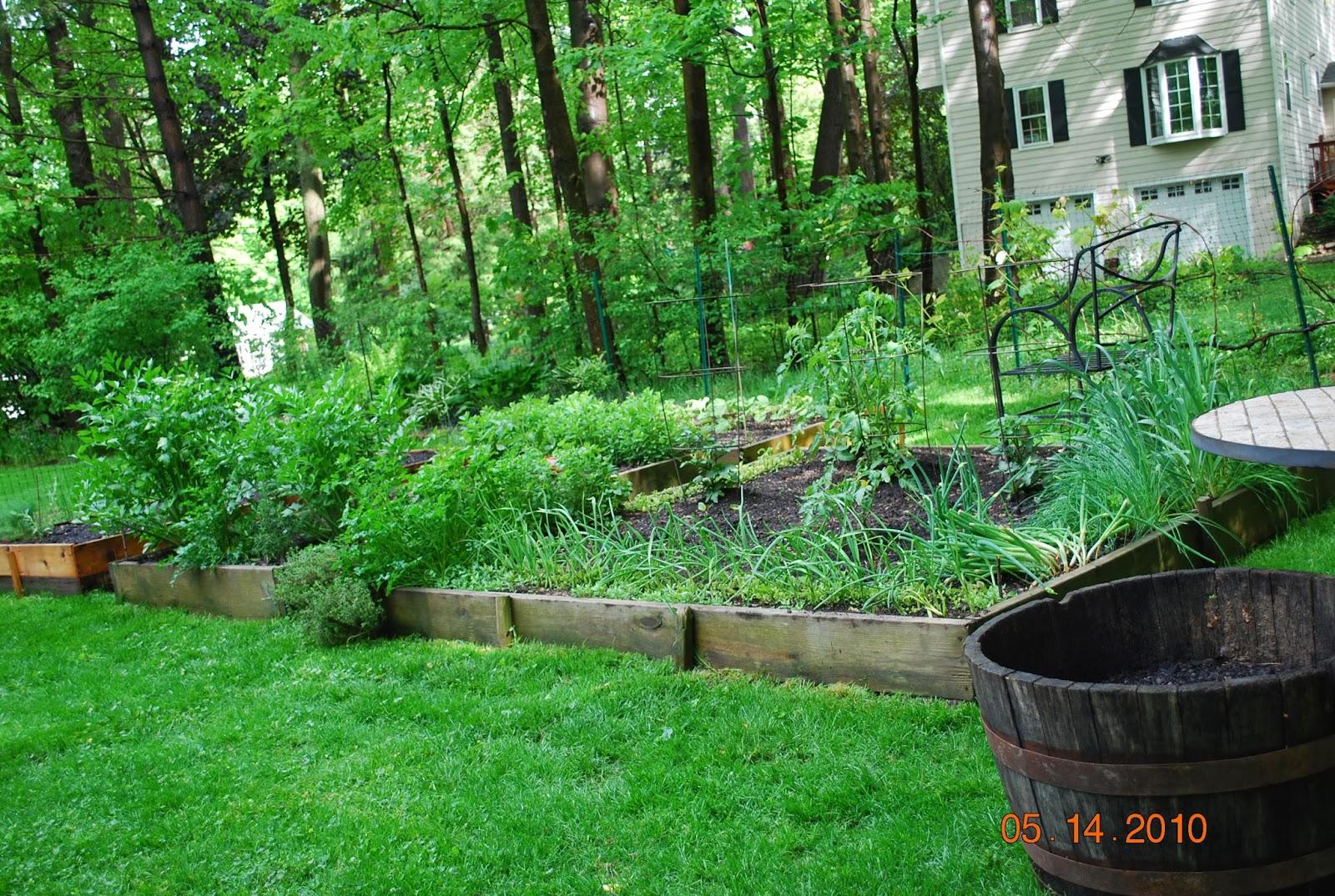The Vegetable Garden Fence