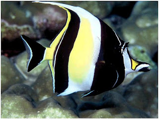 Ikan+Unik+dan+Tercantik+di+Dunia+-1