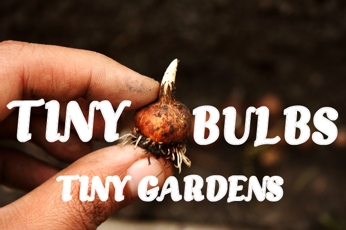 Small Space Garden Bulbs