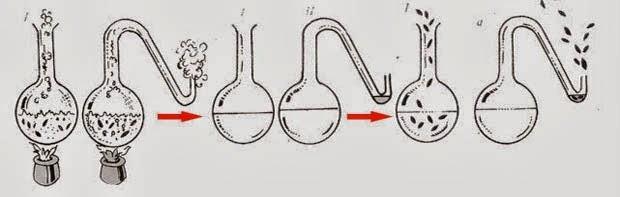 Asal Usul Kehidupan Menurut Teori Biologi Louis Pasteur