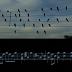 Η μελωδία των πουλιών από άλλη οπτική...