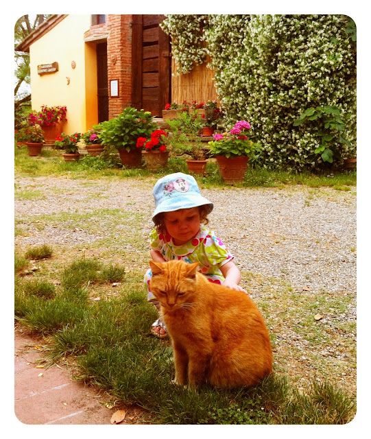 Mini Cheddar Stroking A Cat In Italy