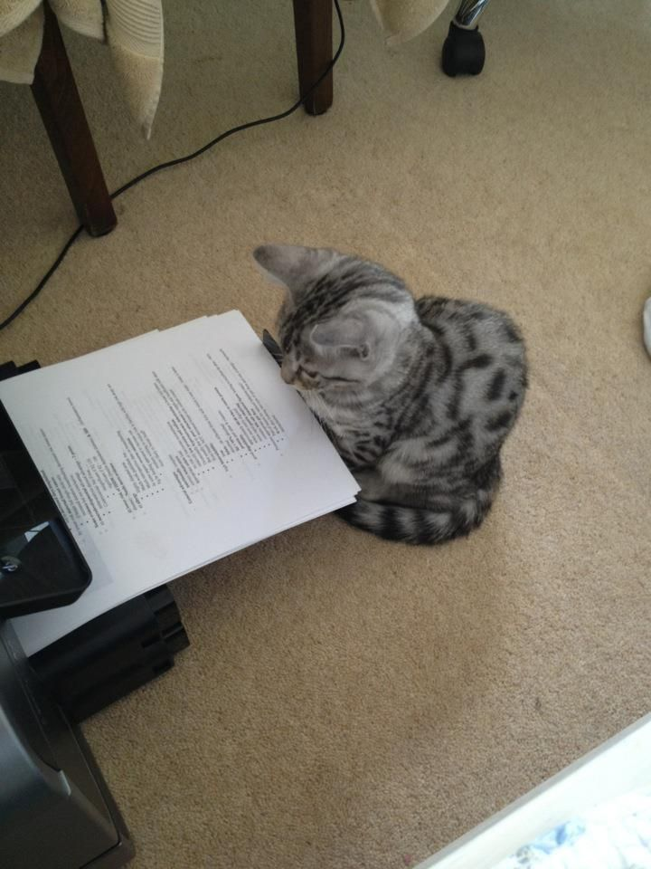 Funny cat pictures part 14, cat reading