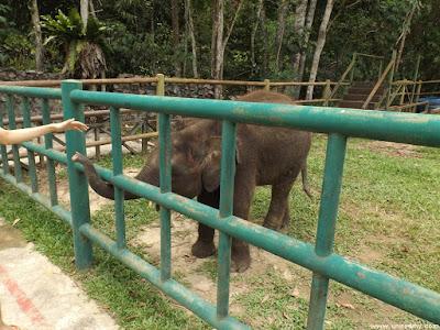 Elephant in Lok Kawi Wildlife Park