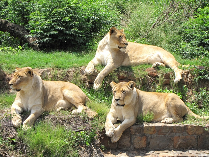 Adventure Top Zoos Of The World