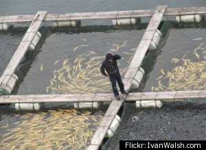 http://phys.org/news/2015-01-china-aquaculture-sector-world-fish.html