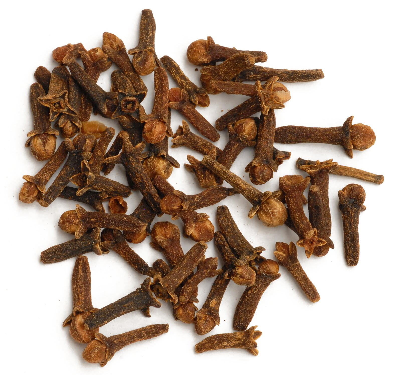 biodiversity heritage library for europe spice of the week clove