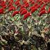 Militer Indonesia Gagal Saingi Israel dan Merosot ke Peringkat 19 Dunia