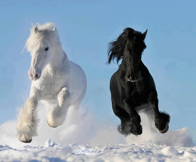 horse wallpaper awesome pair - photo #26