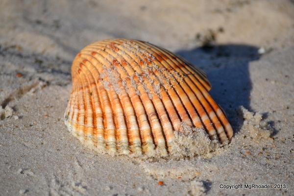 Seashell Natural Photo Essay