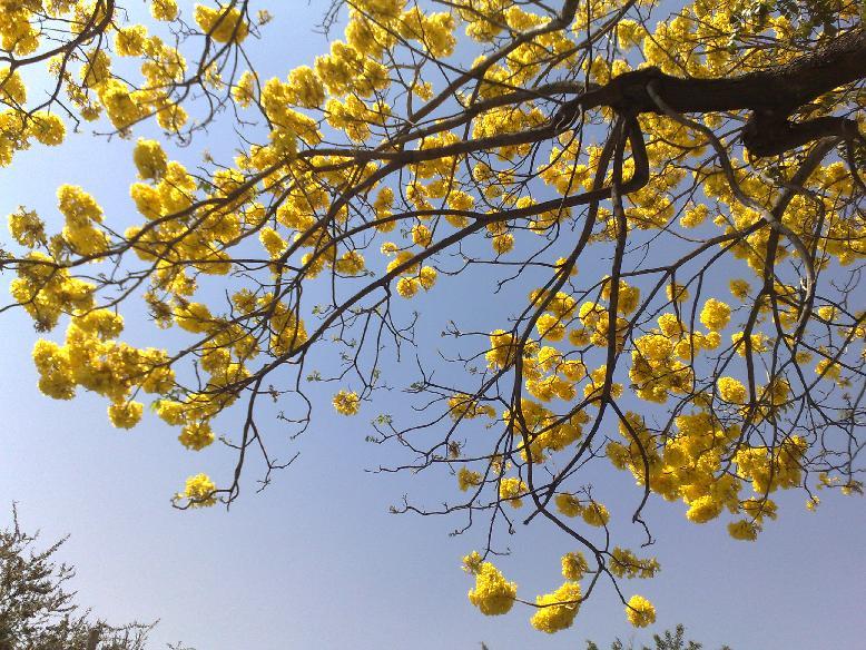 Urb1usb recorrido en metro por la ciudad por maria isabel for Arboles florales para jardin