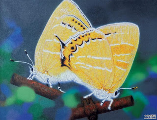 Libelulas y Mariposas en los Cuadros Oleo