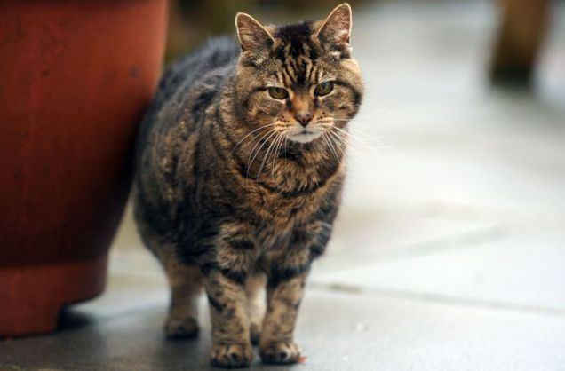 Самая старая кошка в мире - Люси из Великобритании