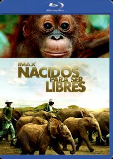 Nacidos Para Ser Libres (2011) | 3gp/Mp4/DVDRip Latino HD Mega
