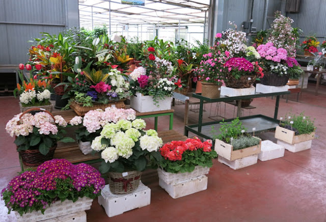 Paisaje libre visita a viveros shangai en madrid for Plantas de vivero
