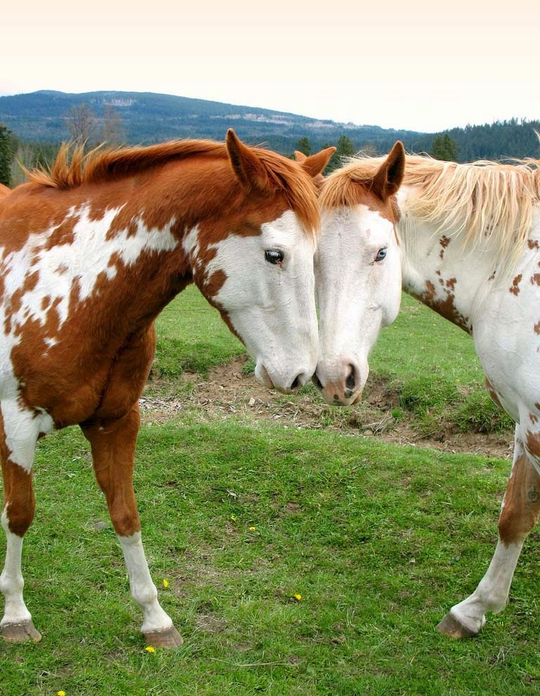 Horses Wallpapers free Download