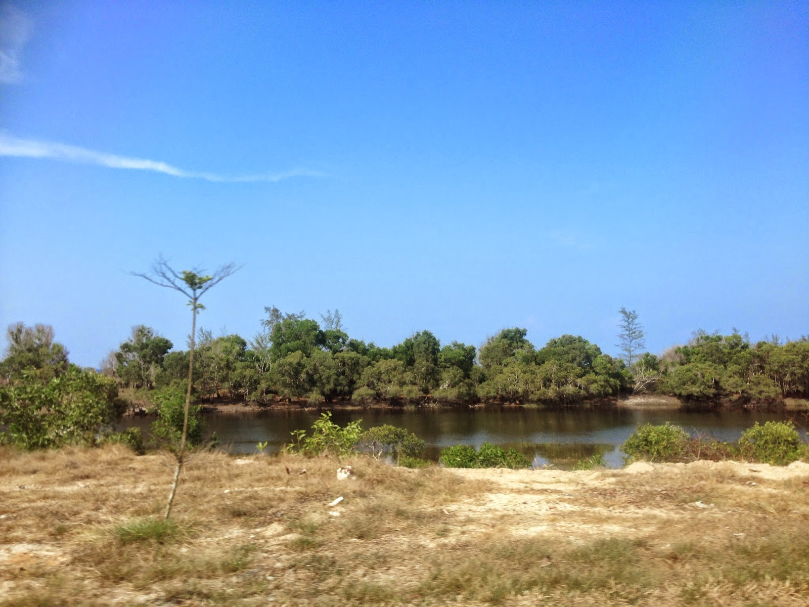 Scenery along the way to Cherating