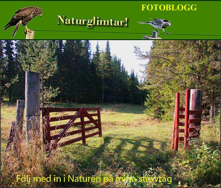 Naturglimtar