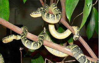 snake-temple-photos-pictures-gallery