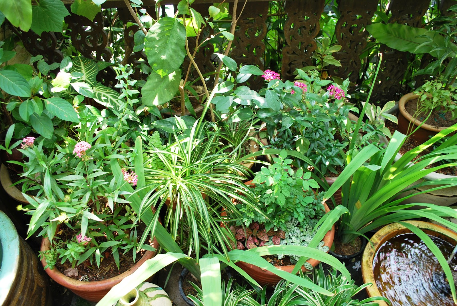 it has been hot and humid but with the greens from my little garden and the trickling water from the fountains - Little Garden
