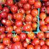 الامراض الفيروسيه على الطماطم