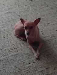 Lilly... quella che si crede la padrona di casa....