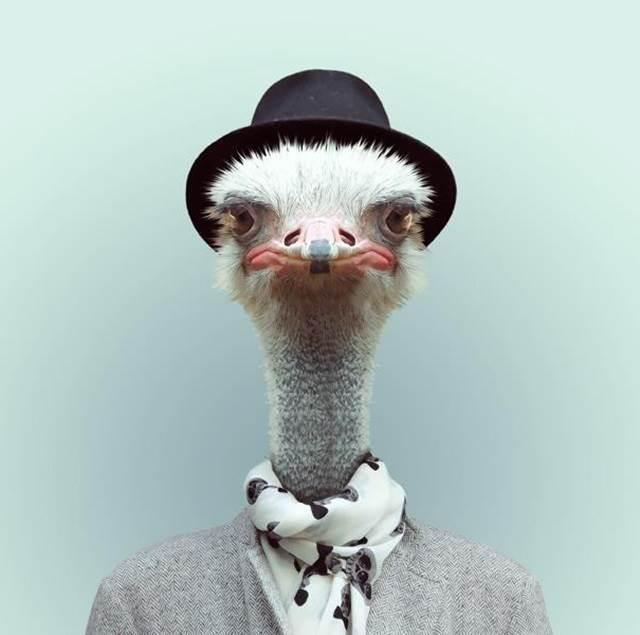 ostrich-berpakaian-manusia