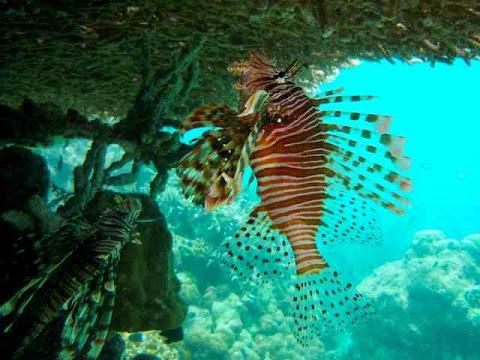 Ikan Pulau Derawan