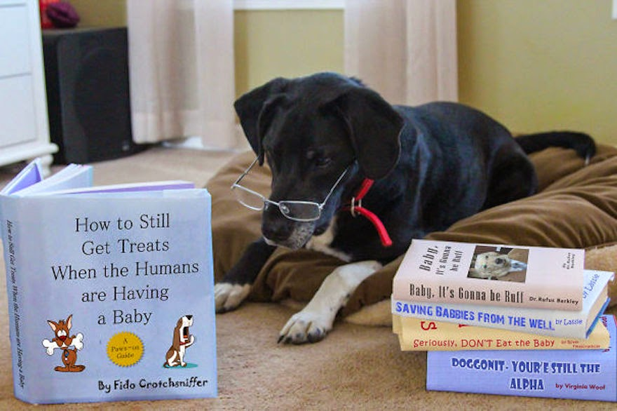 30 Of The Most Creative Baby Announcements Ever - Subliminal Messages Reveal A New Baby And A Rather Concerned Doggy!