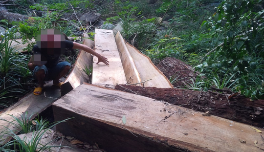 Gia Lai: Đang chở gỗ lậu về nhà Trưởng BQL rừng thì bị bắt