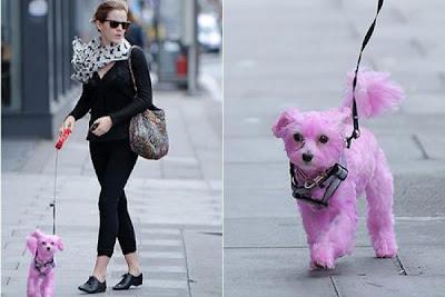 Escandalo de Emma watson con el perrito pintado de rosa